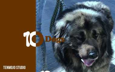 Caucasian shepherd | The strongest, fiercest and largest dog in the world